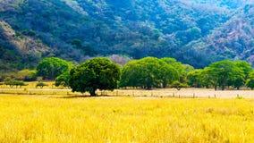 Costa Rica - paysage culturel Photo libre de droits