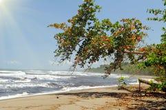 Costa Rica pristine beach. Typical pristine beech in Costa Rica on the Caribbean side shot in Grandoca-Manzanillo wildlife refuge Royalty Free Stock Photo