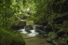 Costa Rica Rainforest Stock Image