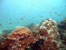 Costa Rica Reef Life Stock Image