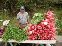 COSTA RICA ROADSIDE COLOSSAL VEGETABLES royalty free stock image