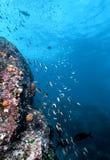 Costa Rica undervattens- vägg Royaltyfria Bilder