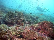 Costa Rica Vibrant Reef Life Stock Photo