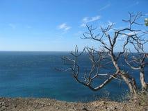 Costa Rica vinter Fotografering för Bildbyråer