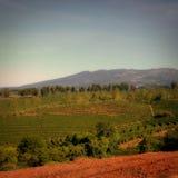 Costa Ricaanse koffieaanplanting royalty-vrije stock fotografie