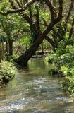Costa Rican creek Stock Photos