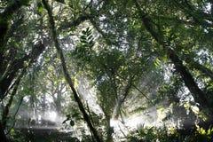 Costa Rican Dschungel Stockbilder