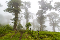 Costa Rican forest. Lush green and foggy forest in Costa Rica Royalty Free Stock Image