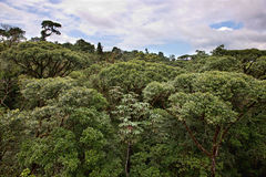 Costa Rican Jungle Canopy Royalty Free Stock Image