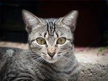 Costa Rican Kitty Imágenes de archivo libres de regalías