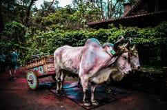 Costa Rican kultura z zwierzętami i florą zdjęcia royalty free