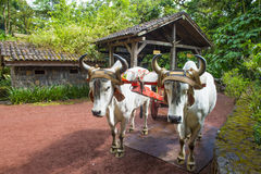Costa Rican ox cart Royalty Free Stock Photos