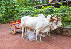 Costa Rican ox cart Stock Image