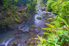 Costa Rican rain forest Stock Photo