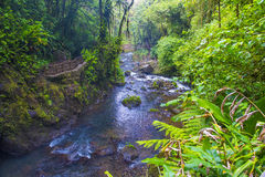 Costa Rican rain forest Royalty Free Stock Images