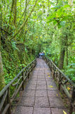 Costa Rican rain forest Stock Image