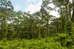 Costa Ricas Jungle and Forest Wildlife. Costa Ricas green Jungle and Forest Wildlife. Real nature Stock Image