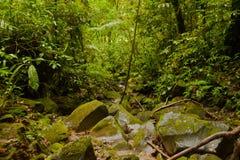 Costa Ricas lasu i dżungli przyroda Fotografia Stock