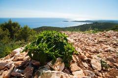 Costa rocciosa davanti al mare blu Immagine Stock Libera da Diritti
