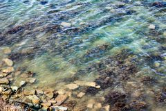 Costa rochosa do mar com ondas, alga e musgoso verdes em pedras no mar Ideia superior do seascape Imagem de Stock