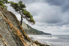 Costa rochoso e uma árvore só imagem de stock