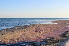 Costa rosada de la isla en el Mar Negro Imágenes de archivo libres de regalías