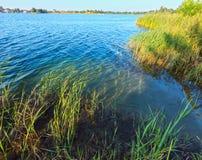 Costa rushy da calma do lago summer Foto de Stock Royalty Free