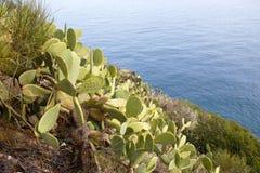 Costa costa salvaje hermosa Fotografía de archivo