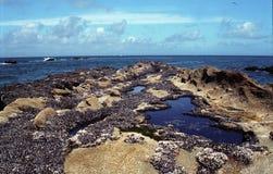 Costa Tidepool de Oregon Fotografia de Stock