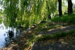 Costa velha urbana do lago pequeno Fotos de Stock