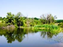 Costa verde do lago pequeno Fotos de Stock