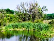 Costa verde do lago pequeno Fotografia de Stock