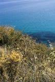 costa verde e amarela da erva daninha com água azul de cristal do mar Fotografia de Stock Royalty Free