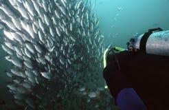 costaen fiskar rica Arkivbilder