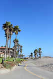 Costal Palms along Mandalay Beach Walkway, Oxnard, CA Stock Image