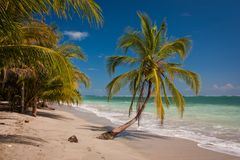 Costarican paradise of Cahuita National Park on East coast. Costarican paradise of Cahuita National Park, lonely palm tree on white beach of Costarica, the royalty free stock photo