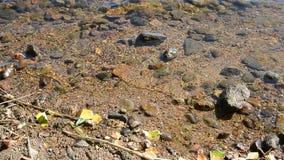 Costas de um lago com rocha video estoque