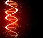Costas do ADN Fotografia de Stock Royalty Free