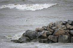 Costas do Lago Erie Imagem de Stock