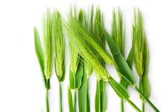 Costas do trigo isoladas no branco. Foto de Stock