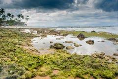 Costeggi la linea coralli sulla spiaggia vicino all'oceano Fotografie Stock Libere da Diritti