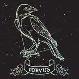 Costellazione del corvo Raven nero che si siede su un'insegna con un segno Disegno a tratteggio accurato isolato su cielo notturn royalty illustrazione gratis