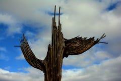 Costillas de decaimiento del cactus del Saguaro Foto de archivo libre de regalías