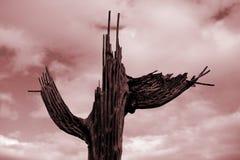 Costillas de decaimiento del cactus del Saguaro con el cielo rojo Foto de archivo