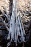 Costillas muertas del cactus del Saguaro en la tierra Fotografía de archivo