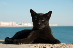 Stray cat on Cadiz, Spain Royalty Free Stock Images