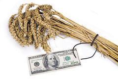 Costly crain. Sheaf of grain with a price tag stock image