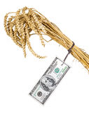 Costly grain. Grain with a price tag stock photos
