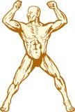 Costruttore di corpo umano maschio di anatomia che flette muscolo Fotografie Stock
