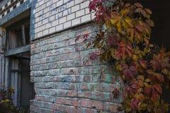Costruzione abbandonata con l'uva selvaggia sulla parete fotografie stock libere da diritti